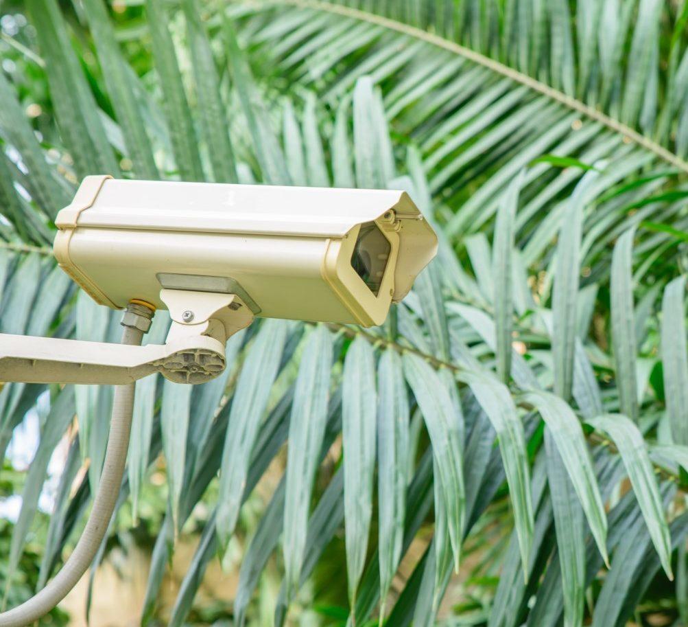 Monitoring in de jungle